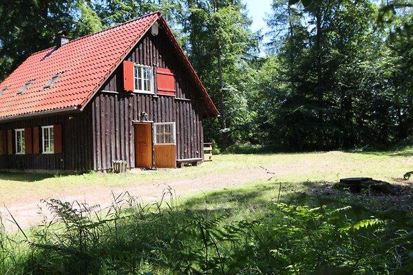 Dachsbau in Kellenhusen - Bild 1