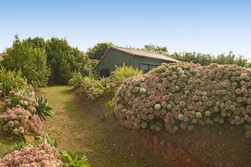 Cottage Casa Nova à Mosteiros - Image 2