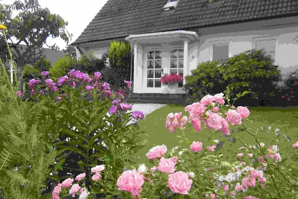 Seevetal-Hittfeld in Seevetal - immagine 1