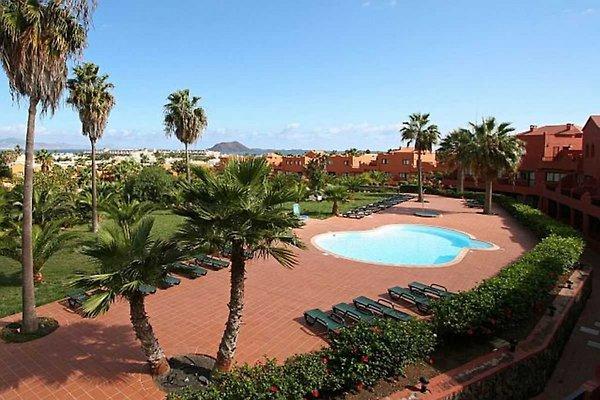 Oasis Royal Corralejo in Corralejo - immagine 1