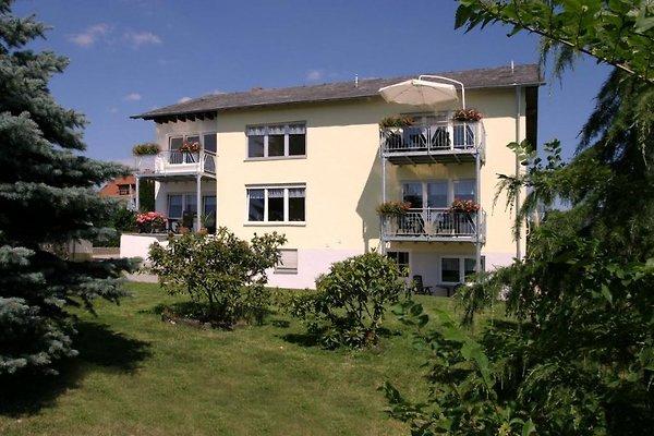 ****Eifel-Mosel-Ferienwohnung in Oberscheidweiler - immagine 1