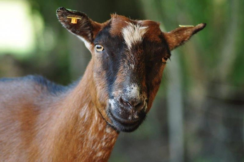 Unsere Tiere freuen sich über Streicheleinheiten!