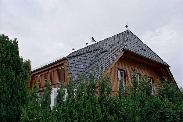 Moderne Ferienwohnung mit Garten  in Mölln - Bild 1