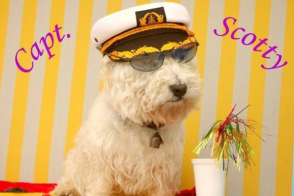 Herr Ostseeoase die Ferienwohnungen am Meer
