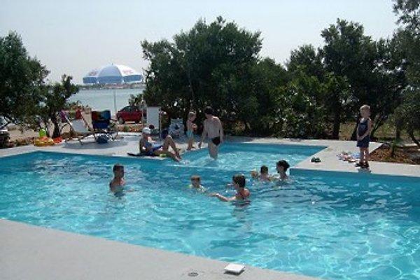 Villa Petra  à Murter - Image 1