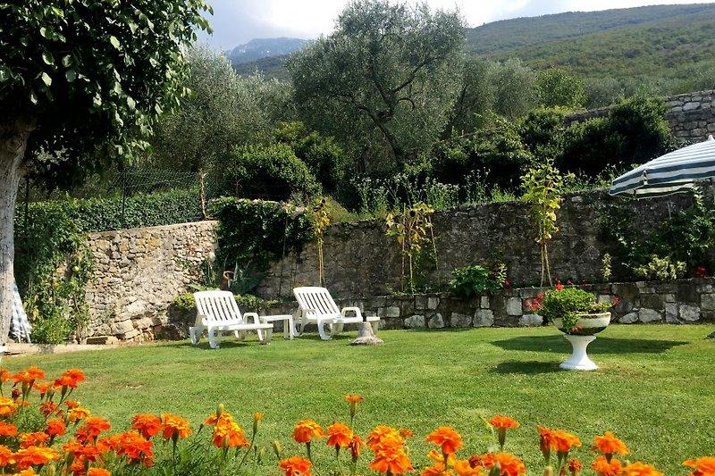 Der Garten mit Liegenstuehlen