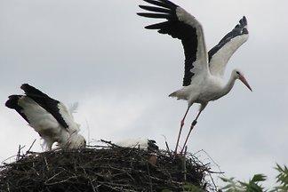 Stork maison