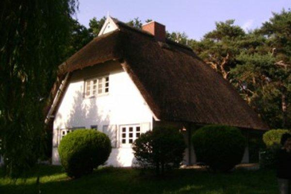 Haus Kienappel in Hohwacht - immagine 1