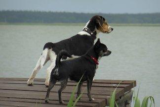 Wassergrundstück mit Hund